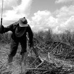 Divulgada a Lista Suja do trabalho escravo